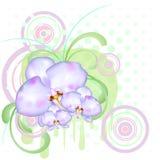 skraj orchid för blomma stock illustrationer