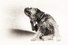 Skrapan som skrapar, hunden, terrier, tafsar, svärtar, vit, kopieringsutrymme Arkivfoton