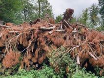 Skrapat granträd på trädhögen royaltyfri fotografi