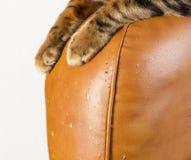 Skrapor från kattjordluckrare på lädermöblemang Katt` s tafsar close- Arkivbild