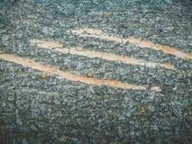 Skrapor på trädet cora Trädstrukturen Royaltyfria Bilder
