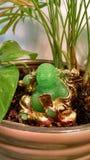 Skratta Buddha i en planter Royaltyfria Bilder
