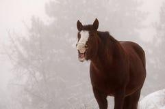 skratta för häst Royaltyfria Bilder