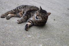 skratta för katt Royaltyfria Foton
