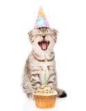 Skratta kattkatten med den födelsedaghatten och kakan Isolerat på vit royaltyfri bild