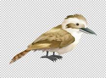 Skrattfågelfågel på genomskinlig bakgrund vektor illustrationer