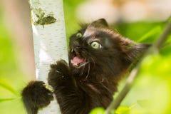 Skriande kattunge i ett träd Fotografering för Bildbyråer