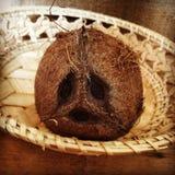 Skriande kokosnöt Royaltyfria Bilder