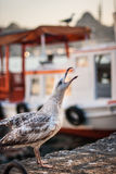 Skriande seagull Royaltyfri Bild