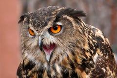 Skrika för Owl Arkivfoto