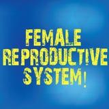 Skriva anmärkningen som visar det kvinnliga reproduktiva systemet Affärsfoto som ställer ut ansvarig i reproduktionen av nya avko stock illustrationer