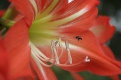 skrivande in blommainföding för bi Royaltyfri Foto