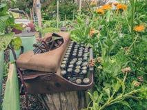 Skrivmaskin i trädgård Royaltyfria Bilder