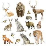 Skrivplattauppsättning av drog djura cliparts för vattenfärg hand royaltyfri fotografi
