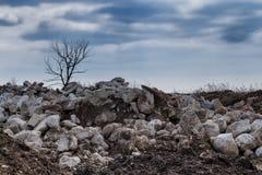 Skrot med ett torrt träd royaltyfri foto