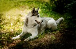 Skrovlig härlig hund av aveln arkivbilder