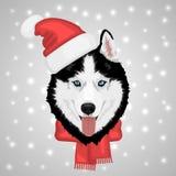 Skrovlig hund för jul Arkivbild