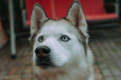 Skrovlig hund som enjoing april arkivbild