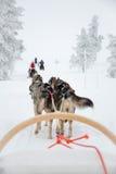 Skrovlig hund som sledding i Lapland Finland Royaltyfria Foton