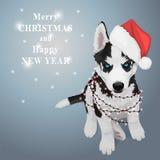 Skrovlig valp för jul Royaltyfria Bilder