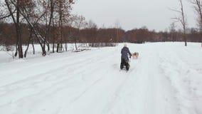 Skrovligt för Siberian i ett hundlag Köra i skogridningen i pulka med ett siberian skrovligt hundlag stock video