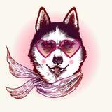 Skrovligt i solglasögon Modedjurillustration Royaltyfria Bilder