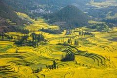Skruvar för fot för Yunnan Luoping terrasserade ståndsmässiga Niujie församlingläger canolablomman Royaltyfria Bilder