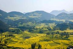 Skruvar för fot för Yunnan Luoping terrasserade ståndsmässiga Niujie församlingläger canolablomman Arkivfoton