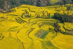 Skruvar för fot för Yunnan Luoping terrasserade ståndsmässiga Niujie församlingläger canolablomman Royaltyfria Foton