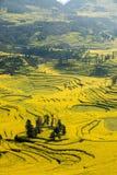 Skruvar för fot för Yunnan Luoping terrasserade ståndsmässiga Niujie församlingläger canolablomman Royaltyfri Fotografi