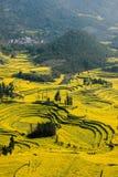Skruvar för fot för Yunnan Luoping terrasserade ståndsmässiga Niujie församlingläger canolablomman Royaltyfri Bild