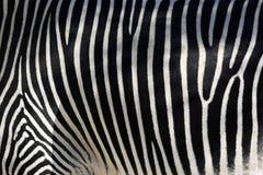 skóry zebra Obraz Stock
