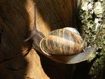 Skrzyżowanie ślimaczka Zdjęcia Stock