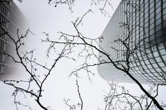 Skrzyżowanie Ameryka, Chicago, miasto ogradzający w mgle obraz stock