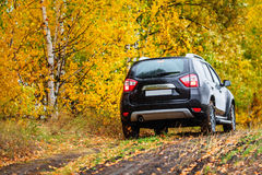 Skrzyżowanie przed jesień lasem Obraz Royalty Free