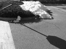 skrzyżowanie przegięta znak stop Obrazy Royalty Free