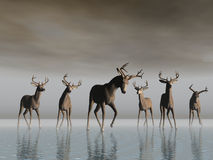 skrzyżowanie jelenia Obraz Stock