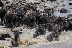 skrzyżowanie Mara rzeki Obrazy Stock