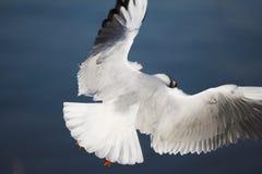 skrzydła zdjęcie stock
