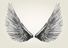 skrzydła Zdjęcia Stock