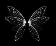 Skrzydła insekt cykada na białym bacground Obraz Royalty Free