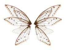 Skrzydła insekt cykada na białym bacground obraz stock