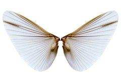 Skrzydła insekt na białym tle Zdjęcia Royalty Free