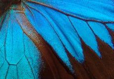 Skrzydła motyli Ulysses Skrzydła motyli tekstury tło zbliżenie Zdjęcia Stock