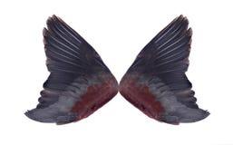 Skrzydła odizolowywający na białym tle Fotografia Stock