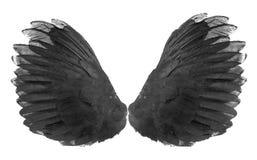 Skrzydła ptaki na białym bacground Obrazy Stock