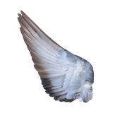 Skrzydła ptaki na białym bacground Zdjęcia Royalty Free