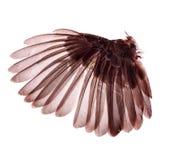 Skrzydła ptaki na białym bacground Obraz Royalty Free