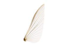 Skrzydła insekt Zdjęcia Royalty Free