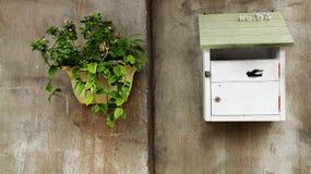 Skrzynka pocztowa i zielone rośliny na cement ścianie Obrazy Royalty Free